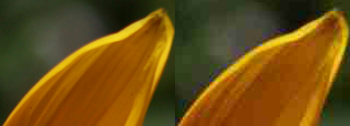 Example of artifacts for the same resolution depending on the compression